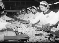 臺灣農工業發展與轉型>農產品運銷>洋菇外銷